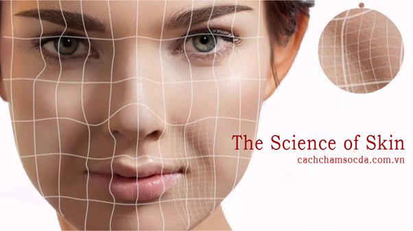 Kiến thức chăm sóc da - Khoa học làn da (kỳ 1): Không chỉ có 4 loại da - Điều trị mụn Dr Huệ - Hình 2